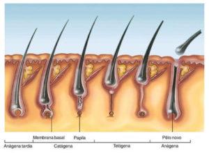 tratamento alopecia queda de cabelo